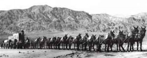 20_Mule_Team_in_Death_Valley.jpg